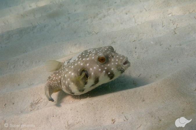 Kurs fotografia podwodna/filmowanie OWD