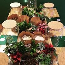Warsztaty tworzenia mini lasu w szkle